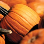 Festive Fall Fun on Gentry Farm