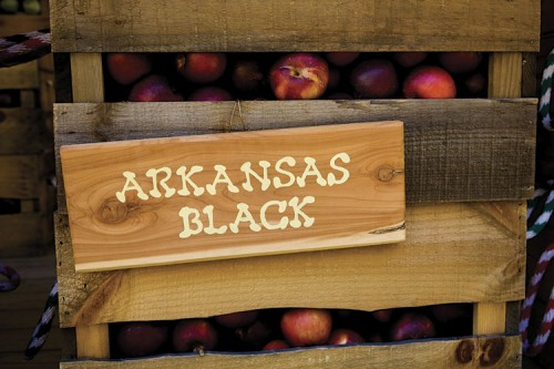 Arkansas Black apples at Mountain View Orchard in TN