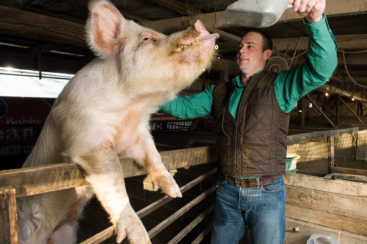 Brandon Whitt, pigs, farming