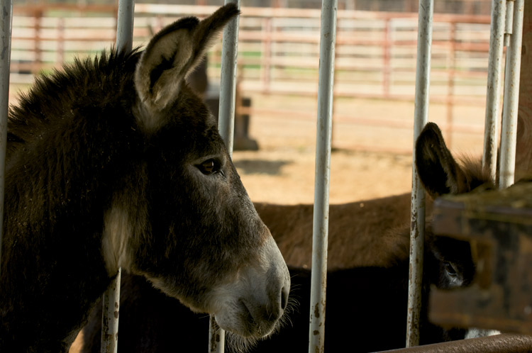 Randall and Paula Carr, Wild Horse and Burro Adoption Center, Cross Plains, TN