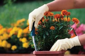 garden, gardening