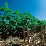 Farm Facts: Soybeans