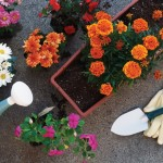 Green Tips for Eco-Friendly Gardening