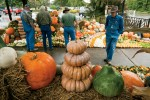 Pumpkin Harvest Display in Jackson, TN