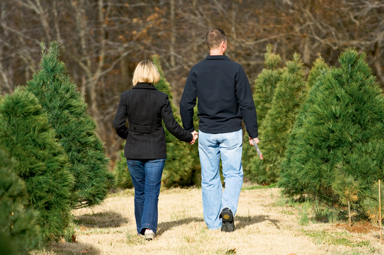 trek to a tennessee christmas tree farm tennessee home and farm