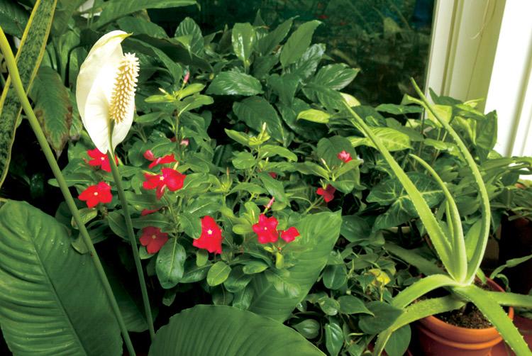 plants, houseplants