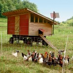 Farm Facts: Chickens and Poultry