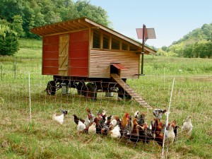 chickens, farm, hen house