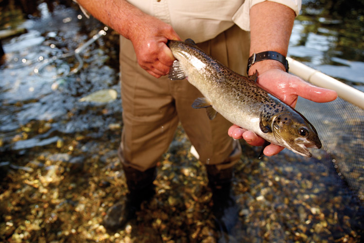 Fly fishing for Atlantic Salmon in TN