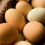 Farm Facts: Eggs