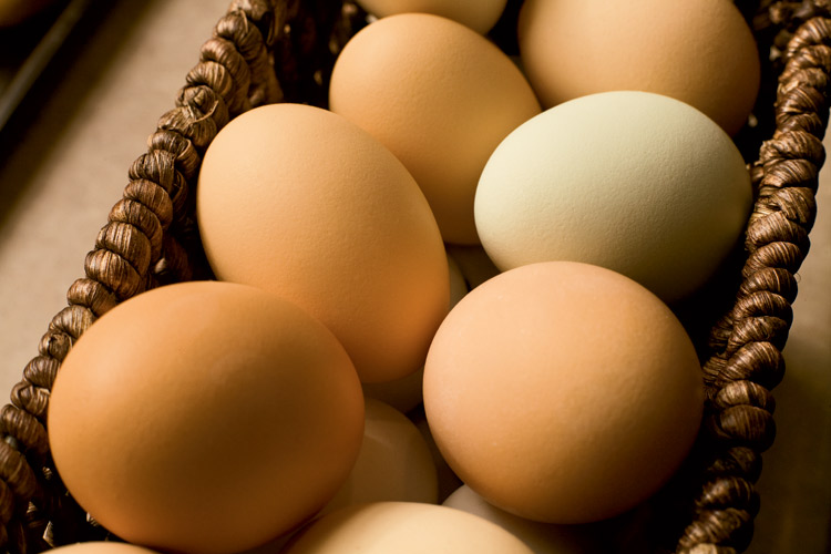 Farm Facts about eggs for May's National Egg Month