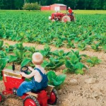 16th Annual Tennessee Farm Bureau Photo Contest