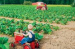 TN Farm Bureau Photo Contest 1st Place Childhood Memories - 2010