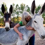 Fun Facts About Mules and Donkeys