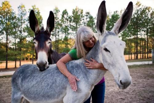 Horse Mule and Donkey