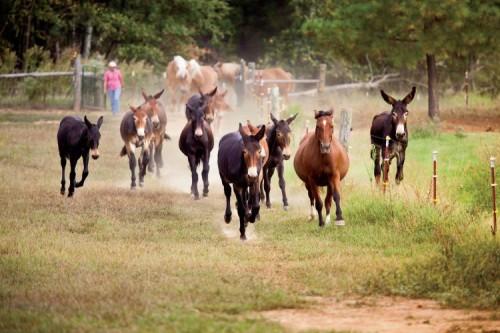 Lake Nowhere Mule and Donkey Farm in Martin, TN
