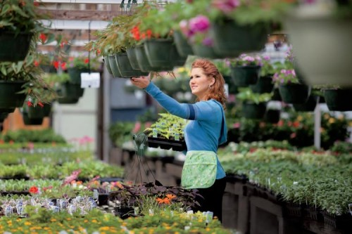 Debbie Vaughn of the Old Feed Store Antique Mall in Woodbury, Tennessee, stock up her greenhouse at Mary's Greenhouse, Inc,, in McMinnville, Tennessee.
