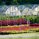 McMinnville, Tennessee: Nursery Capital of the World