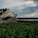 Weathering the Storm: Farmers Face Floods, Other Challenges