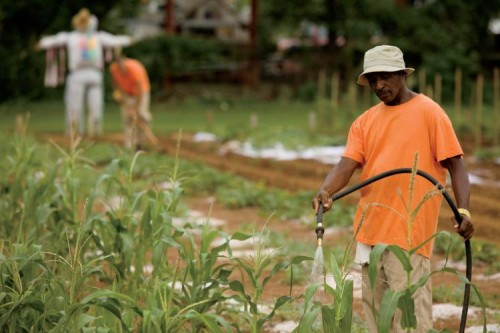 Inmates work in the Garden of Hope, Murfreesboro, TN