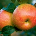 Apple Facts and Recipes for the Fall Harvest