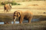 Adopt an Elephant Campaign with Grandma's Molasses and The Elephant Sanctuary
