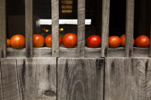 Tomatoes sit on the windowsill of a cabin at the Taylor Family reunion in Brownsville
