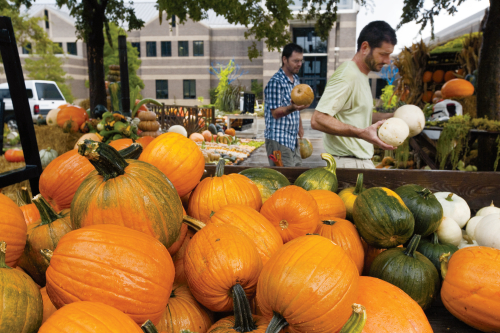 Picking the Right Pumpkin
