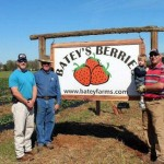 Pick Your Own Strawberries at Batey Farms