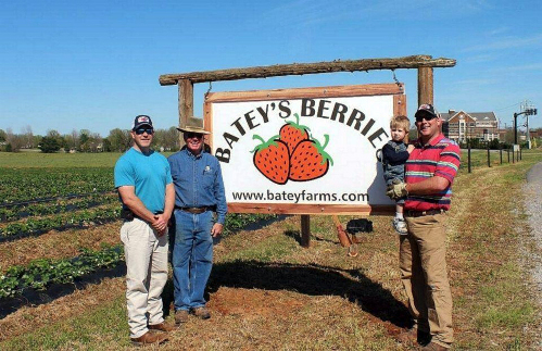 Batey Farms Strawberries