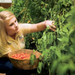 Tomato-Growing Tips