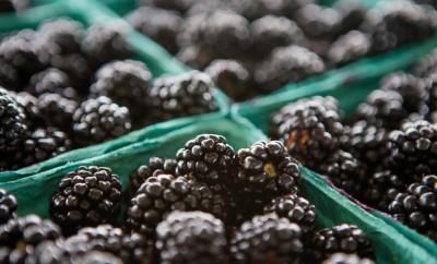Cowan Blackberry Farms