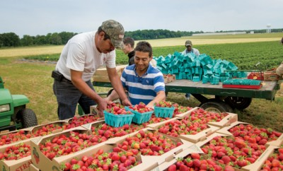 Green Acres Strawberry Farm