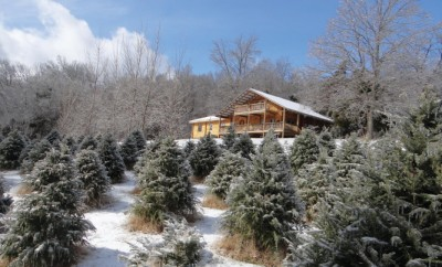 Wildwood Christmas Tree Farm